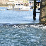 DSC_0680, Guernsey