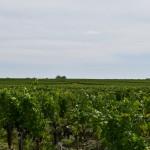 DSC_0367, Bordeaux