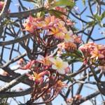 DSC_0959, Grenada