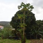 DSC_0268, Grenada