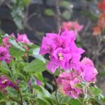 DSC_0276, Grenada