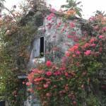 DSC_0297, Grenada