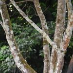 DSC_0307, Grenada
