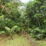 DSC_0309, Grenada