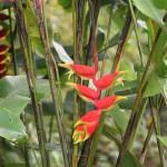 DSC_0313, Grenada