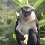 DSC_0333, Grenada